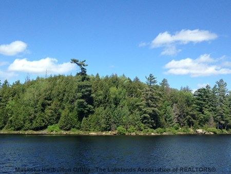 Growler Lake Road, Haliburton 6499 large 1027690 391400157 01